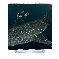 Scuba Diver And Whale Shark, Papua Shower Curtain by Steve Jones