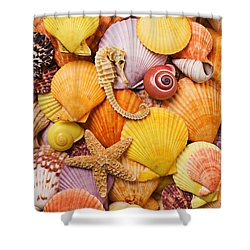 Sea Horse Starfish And Seashells  Shower Curtain by Garry Gay