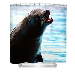 Sea-lion Shower Curtain by Carlos Caetano