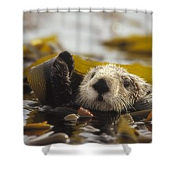 Sea Otter Enhydra Lutris Floating Shower Curtain by Gerry Ellis