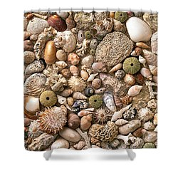 Sea Shells  Shower Curtain by Mauro Celotti