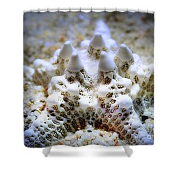 Sea Star Shower Curtain by Judi Bagwell