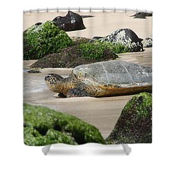 Sea Turtle 1 Shower Curtain