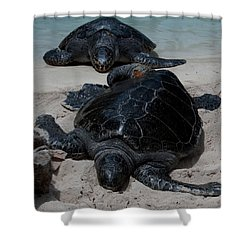 Sea Turtles2 Shower Curtain by Karen Harrison