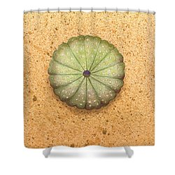 Sea Urchin Shower Curtain by Katherine Young-Beck