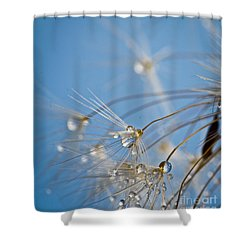 Seabreeze Shower Curtain by Tracy  Hall