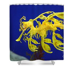 Shower Curtain featuring the photograph Seadragon by Milena Boeva