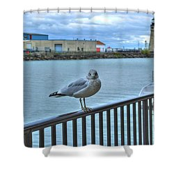 Shower Curtain featuring the photograph Seagull At Lighthouse by Michael Frank Jr