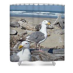 Seagull Bird Art Prints Coastal Beach Bandon Shower Curtain by Baslee Troutman