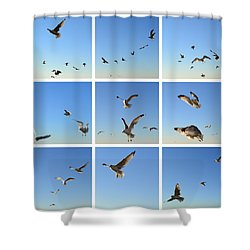 Seagull Collage 2 Shower Curtain by Michelle Calkins