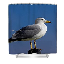 Shower Curtain featuring the photograph Seagull by David Gleeson
