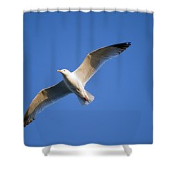 Seagull Flying Shower Curtain by Keith Levit