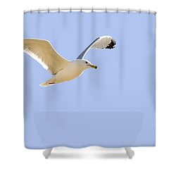 Seagull In Flight Shower Curtain by Don Hammond