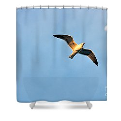 Shower Curtain featuring the photograph Seagull by Luciano Mortula