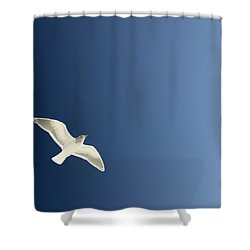 Seagull Soaring Shower Curtain by Con Tanasiuk