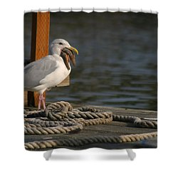 Shower Curtain featuring the photograph Seagull Swallows Starfish by Kym Backland