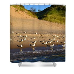 Seagulls At The Bowl Shower Curtain by Michelle Calkins