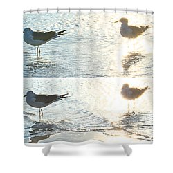 Seagulls In A Shimmer Two Views By Olivia Novak Shower Curtain by Olivia Novak