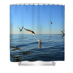 Seagulls Over Lake Michigan Shower Curtain by Michelle Calkins