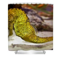 Seahorse Of Course Shower Curtain by DigiArt Diaries by Vicky B Fuller