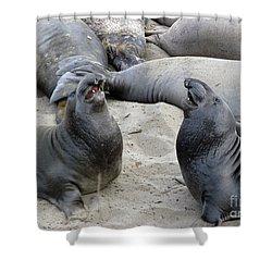 Seal Spa. Men's Talk2 Shower Curtain by Ausra Huntington nee Paulauskaite