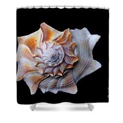 Shower Curtain featuring the photograph Seashell 1 by Deniece Platt