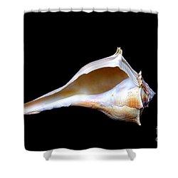 Shower Curtain featuring the photograph Seashell 2 by Deniece Platt