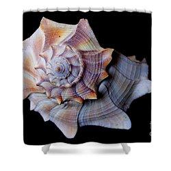 Shower Curtain featuring the photograph Seashell 5 by Deniece Platt