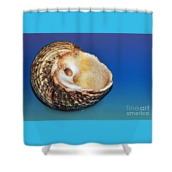 Seashell Wall Art 2 Shower Curtain by Kaye Menner
