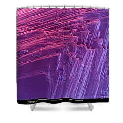 Sem Of A Diamond Shower Curtain by Ted Kinsman