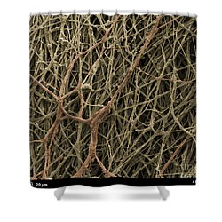 Sem Of Mycelium On Mushrooms Shower Curtain by Ted Kinsman