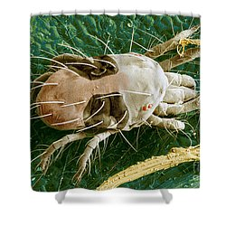Sem Of Two-spotted Spider Mite Shower Curtain by Science Source