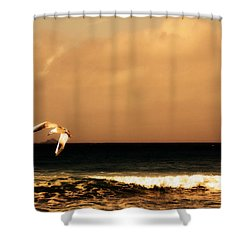 Sennen Seagull Shower Curtain by Linsey Williams