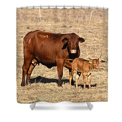 Senopol Surrogate With Calf Shower Curtain by Science Source