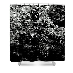 Shower Curtain featuring the photograph Serene by Jeanette C Landstrom
