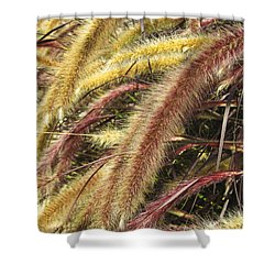 Setaria Italica Red Jewel - Red Bristle Grass Shower Curtain by Anne Mott