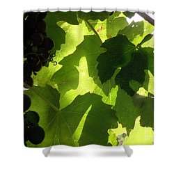 Shadow Dancing Grapes Shower Curtain by Lainie Wrightson