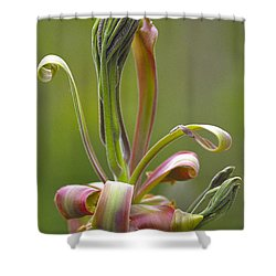 Shagbark Hickory Leaf And Flower Bud Shower Curtain