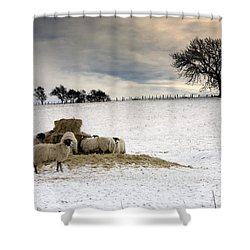Sheep In Field Of Snow, Northumberland Shower Curtain by John Short