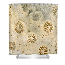 Shell - Conchology - Coral Shower Curtain by Mike Savad