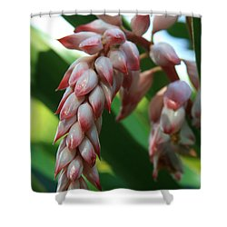 Shell Ginger Alpinia Zerumbet Tropical Flowers Of Hawaii Shower Curtain by Sharon Mau