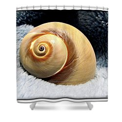 Shower Curtain featuring the photograph Shell One by Danielle  Parent