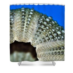 Shell With Pimples 2 Shower Curtain by Kaye Menner