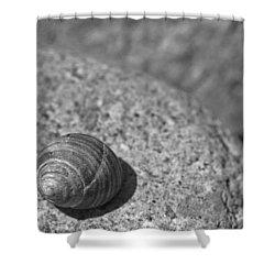 Shells IIi Shower Curtain by David Rucker