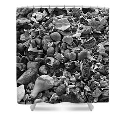 Shells Iv Shower Curtain by David Rucker