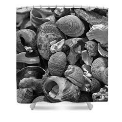 Shells V Shower Curtain by David Rucker