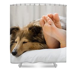 Sheltie Sleeping With Her Owner Shower Curtain