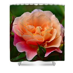 Sherbet Rose Shower Curtain