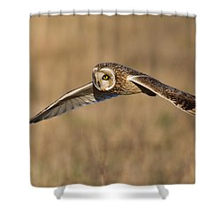 Short Eared Owl Hunting Shower Curtain