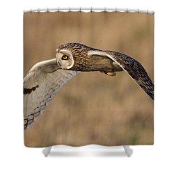 Short-eared Owl In Flight Shower Curtain